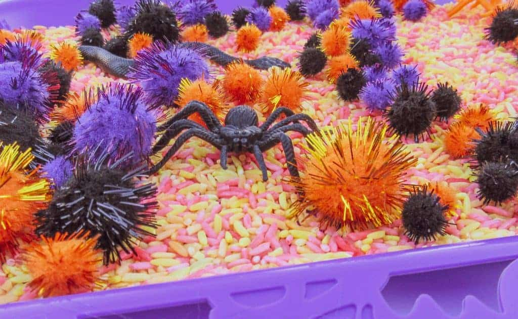 halloween spider sensory bin preschool