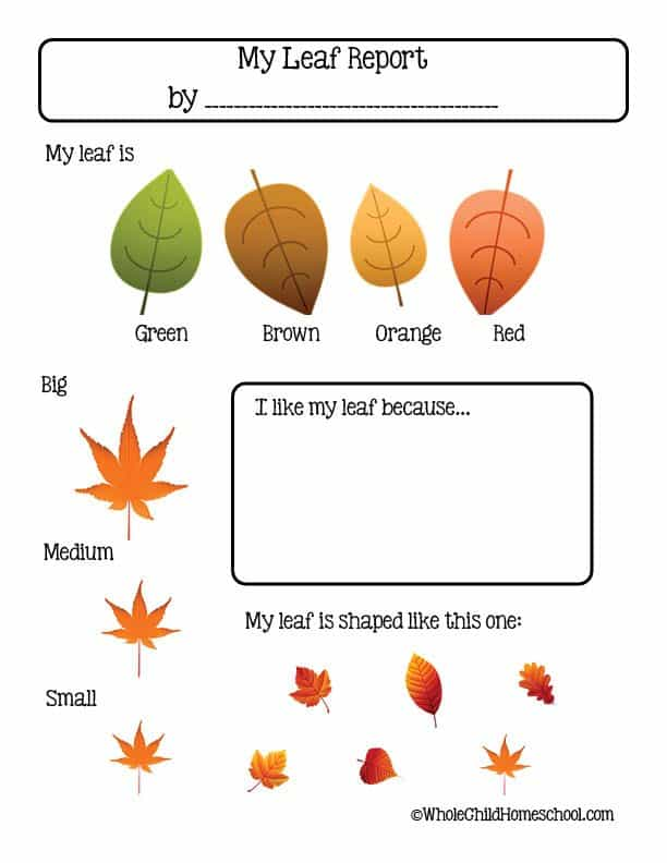 fall leaf report