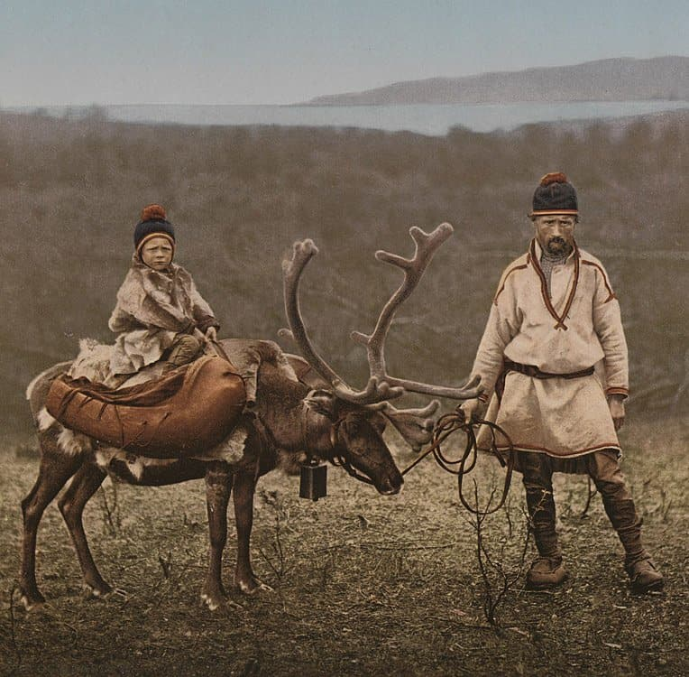 saami reindeer